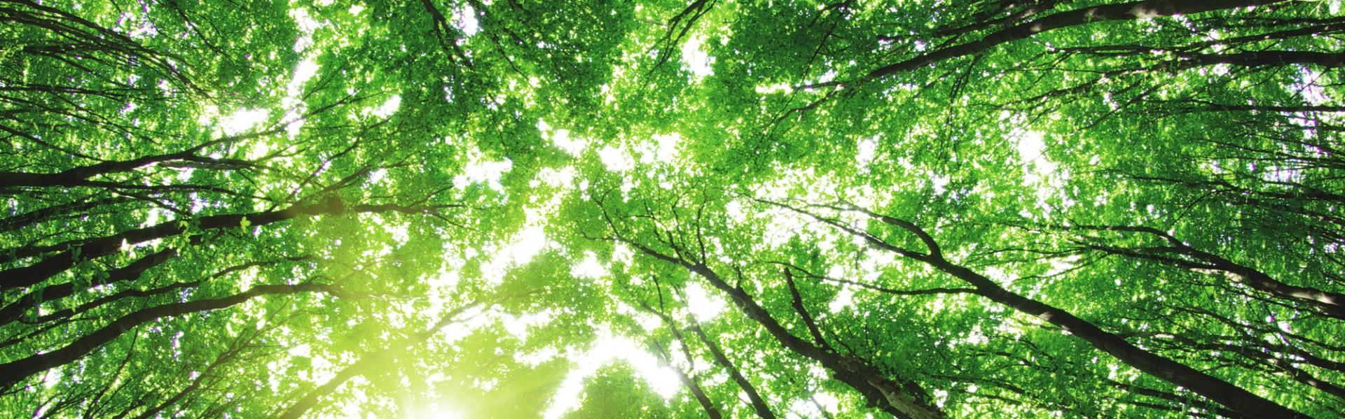environment-banner
